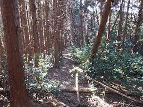 植林の脇を進む