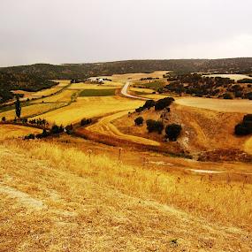 Segorbriga, Cuenca by Joseph Escopin - Landscapes Prairies, Meadows & Fields ( tree, cuenca, archeologial site, segorbriga, landscape )
