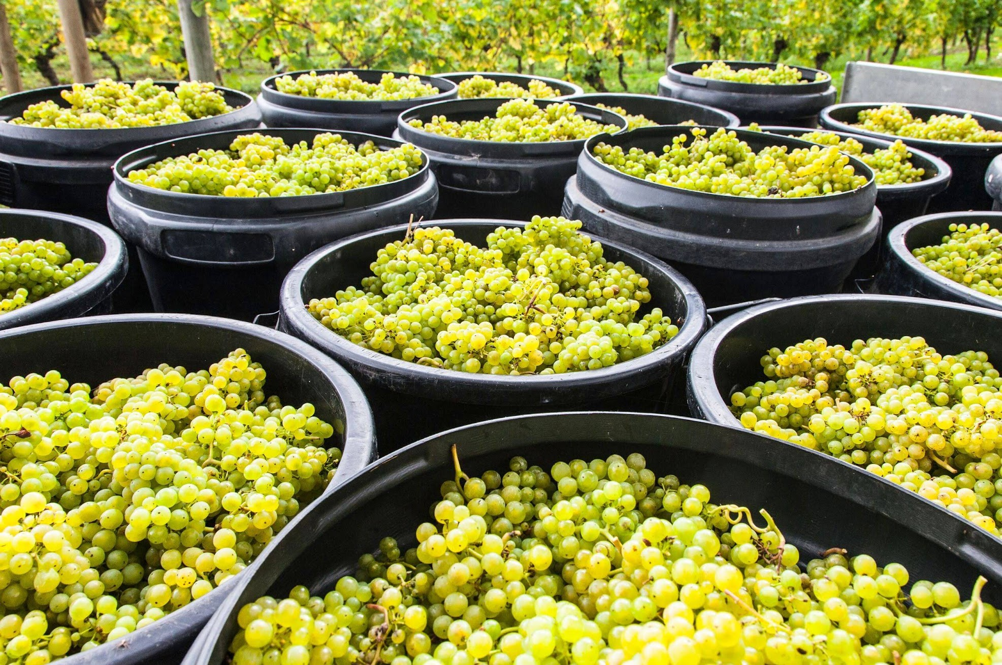 wijngaarden-essen