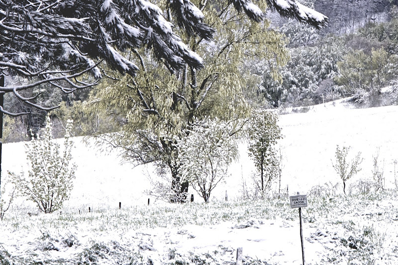 ultima neve di primavera di Ltz/rivadestra