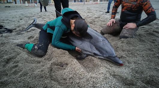 """""""Lleno de heridas y sangrando"""": muere el delfín que apareció ayer en El Zapillo"""