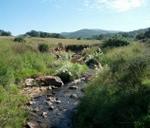 THUHC HIKE - 40 - Klipriviersberg Nature Reserve ( 5/6km) Sold Out : Klipriviersberg Nature Reserve