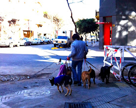 Photo: Lots of dog walkers in Palermo Soho.