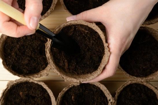 La imagen tiene un atributo ALT vacío; su nombre de archivo es manos-femeninas-plantar-semillas-maceta-turba_168730-367.jpg