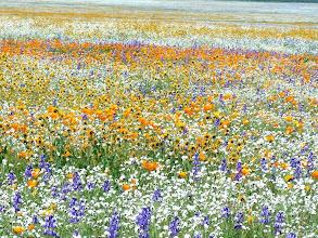 Photo: Wildflowers - M. White