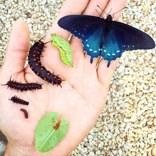 Veja o homem que conseguiu cuidar e criar espécies raras de borboletas em seu jardim