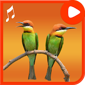 Bird Ringtones