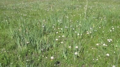 Photo: Over abundant wild iris provides a managemetn challenge