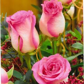 by Mary Stewart - Flowers Flower Buds