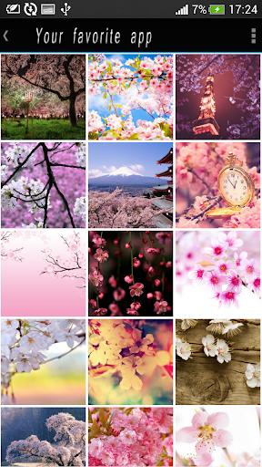 櫻花櫻花主題