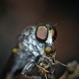 robber fly by Rajesh Mondal - Instagram & Mobile Android ( mobilography )