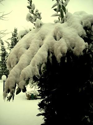 Bianco Inverno di Silken