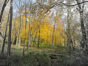 Photo: Color splash on yellow leaves in the forest of Hills and Dales Metropark in Dayton, Ohio.