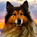 collie wallpaper icon