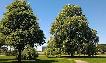 Photo: Ford World HQ Arboretum