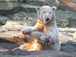 Photo: Ein wenig Eisbaeren-Yoga tut da immer gut :-)