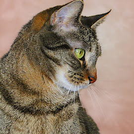 by Susan Hogan - Animals - Cats Portraits