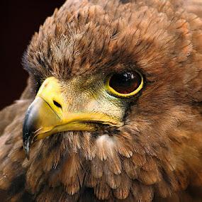Wistful by Sue Green - Animals Birds (  )