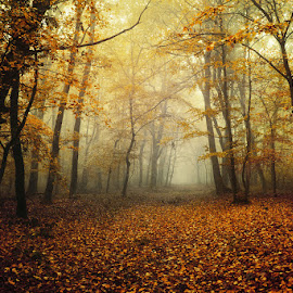 2668 by Zsolt Zsigmond - Landscapes Forests ( foggy, beauty, nature, woods, scenery, trees, misty, mist, foliage, path, trail, woodlands, fall, leaves, light, autumn, landscape, fog )