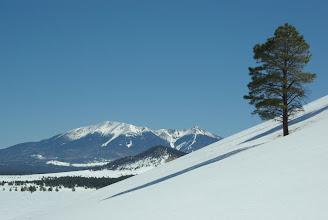 Photo: Lone pine, Government Prairie, Arizona USA