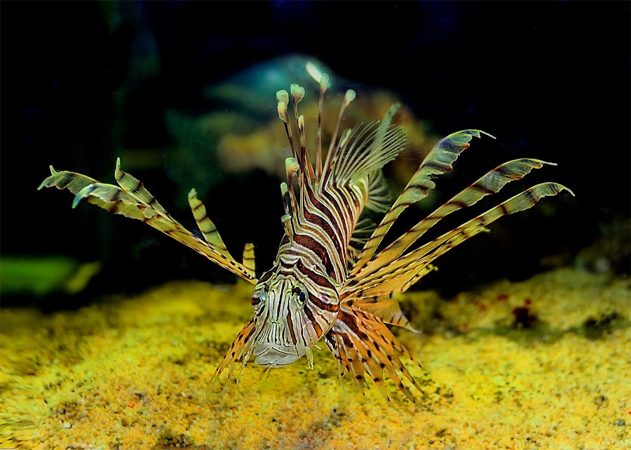 by Daniel Chang - Animals Fish ( sea creatures, underwater life, ocean life )