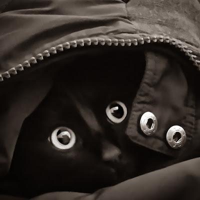 Occhi-elli di fabianostrovegli