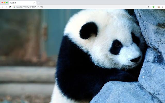 Cute Panda New Tab Pop Pop HD Wallpaper Theme