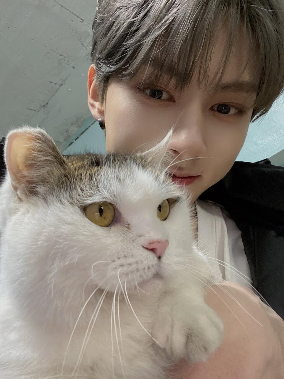 jun cat