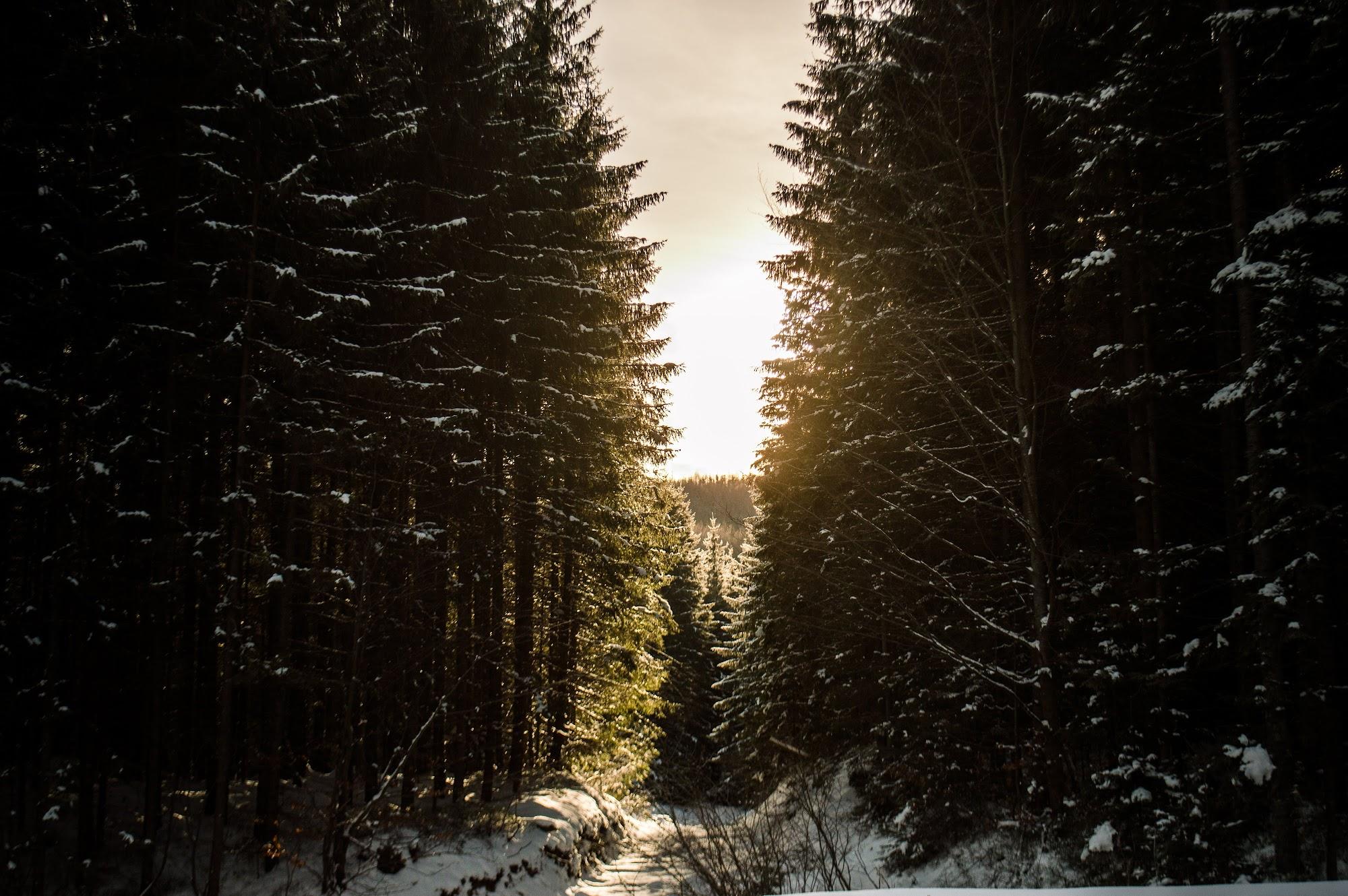 Лісовозна дорога в лісі