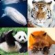 Learn All Mammals - Animals Quiz Download on Windows