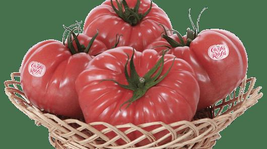 Grupo Agroponiente apuesta fuerte por el tomate de sabor con seis variedades