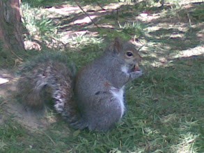 """Photo: My new little friend lunching yesterday. In the picture, she eat my biscuit. Her name is """"Rodolfa"""""""