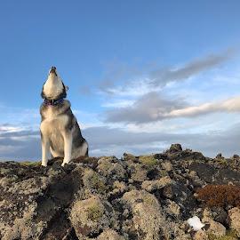Ronja by Bjarklind Þór - Animals - Dogs Portraits ( lavafield )