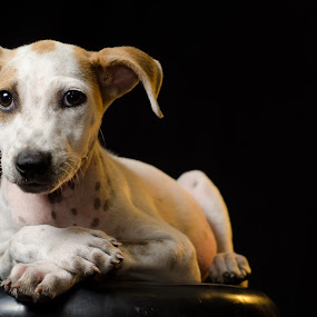 Adopt me by Ricardo Carrillo Tamez - Animals - Dogs Puppies