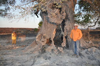 Photo: ....This tree had been a national champion since 1976, but it was no match for a wildfire that burned at speeds over 15 mph, destroyed 24 buildings, and covered more than 314,000 acres before it was over a month later. I guess this part belongs on our 'worst of 2011' list instead....