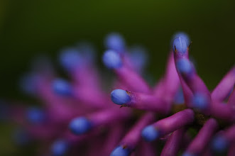 Photo: thank you all and goodnight #flowerfriday by +Tamara Pruessner