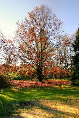 L'albero e i colori dell'autunno di c