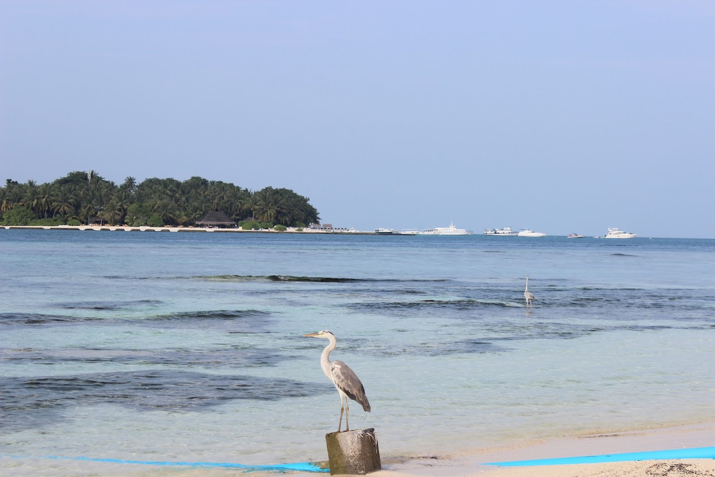 Рашдо туристический пляж бикини