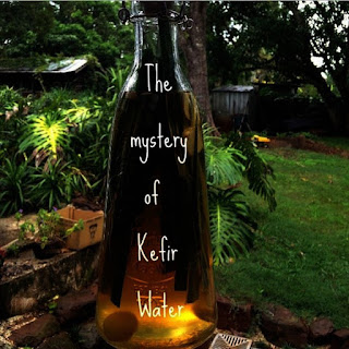 Brewing Water Kefir
