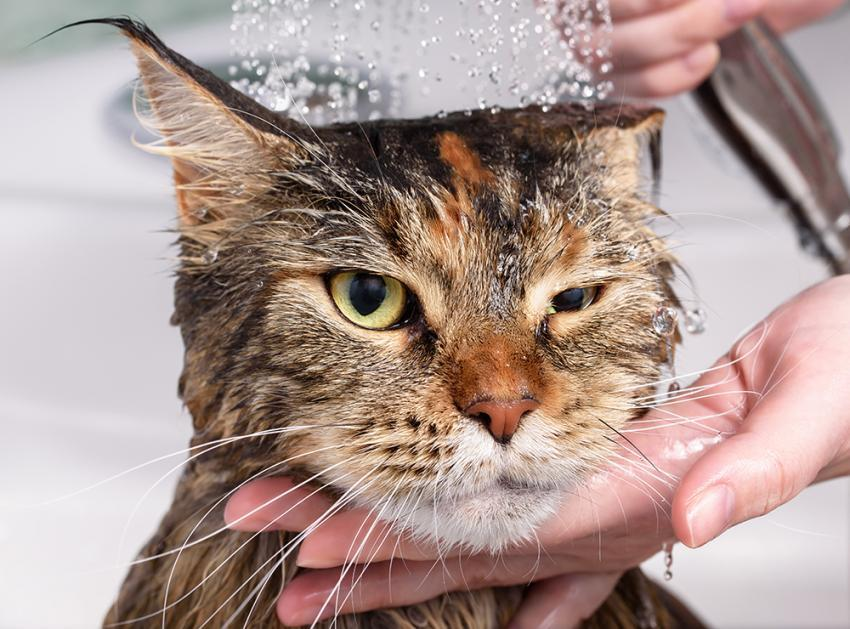 How To Get Your Cat Used To Water | Figo Pet Insurance