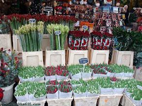 Photo: amsterdam, flower, holland, market, netherlands, travel