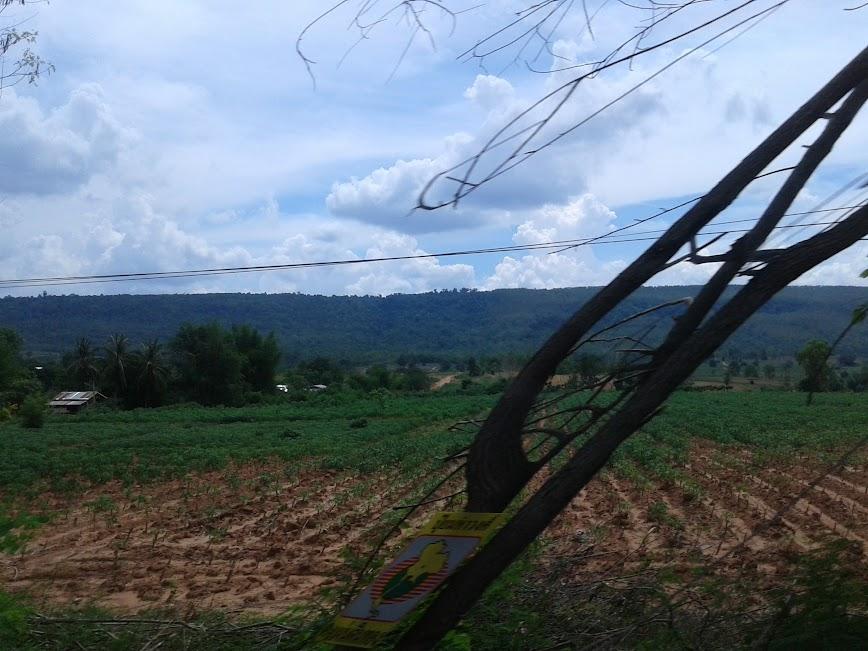 สองข้างทางจากสระบุรี-ลพบุรี-อ.เทพสถิต-ชัยภูมิ
