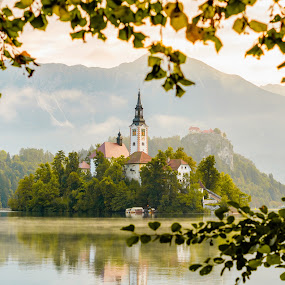 Morning at Lake by Andrej Folo - Landscapes Mountains & Hills ( slovenia, sunrise, forest, color, island, bled, church, tree, leaf, mist, morning, light, travel, lake, europe, landscape,  )