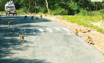 Photo: Mehr Affen gab es dann unterwegs