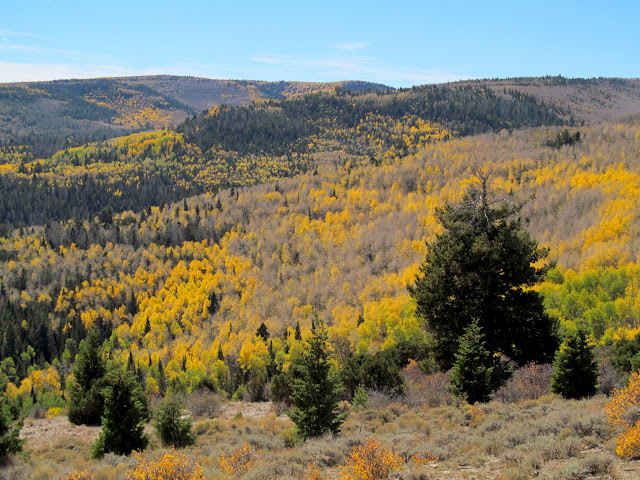 Yellow aspen at the head of Cottonwood Canyon