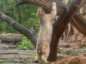 Photo: Den muss Knut genauer unter die Lupe nehmen ;-)