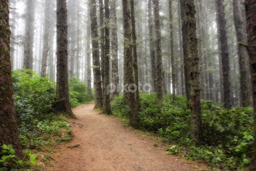 Foggy Morning Walk by Kay Martin - Landscapes Forests