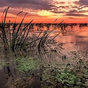 Sunrise in Sulina, Danube Delta&Black Sea by Tomita Savastre - Landscapes Waterscapes ( clouds, reed, green, sunrise, river )