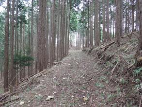この先で林道が左右に分かれ