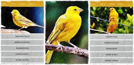 Masteran Suara Burung Kenari MP3 Offline APK 0